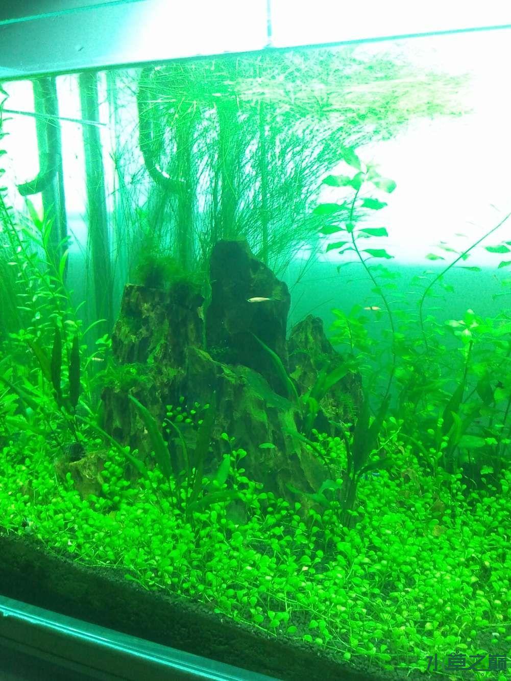 千寻杯造景比赛+中缸组:我的草缸 北京观赏鱼 北京龙鱼第3张