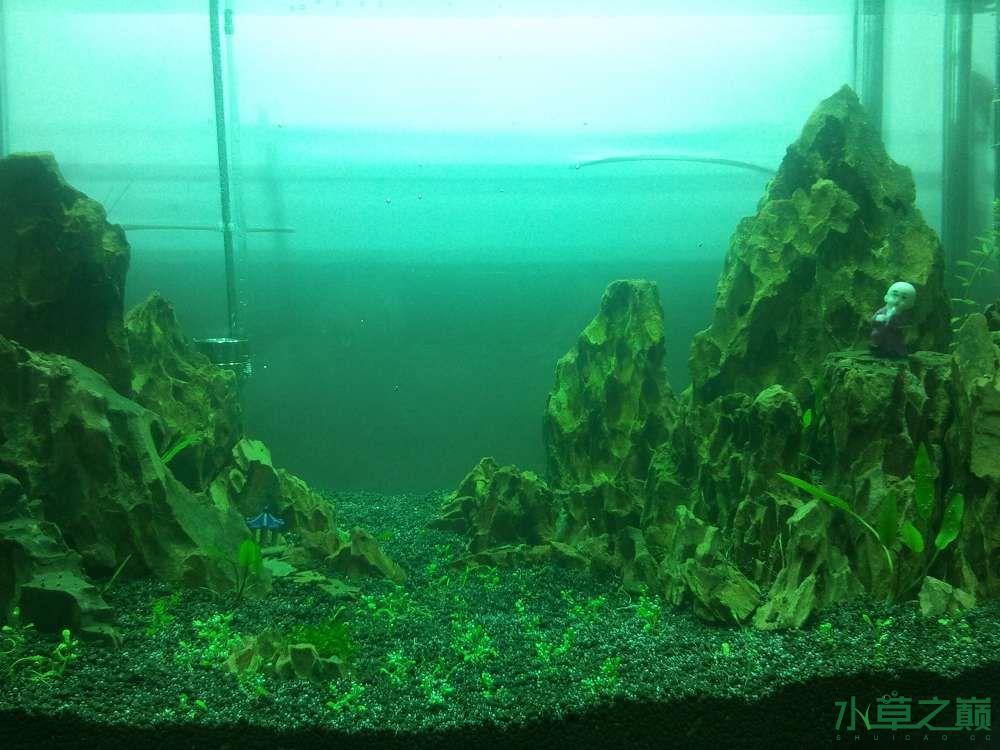 千寻杯造景比赛+中缸组:我的草缸 北京观赏鱼 北京龙鱼第6张