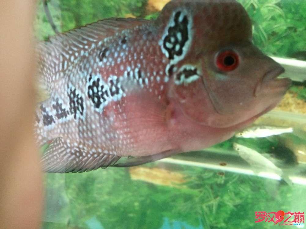 同学让我放生了大神们帮忙看看这鱼如何 北京龙鱼论坛 北京龙鱼第2张