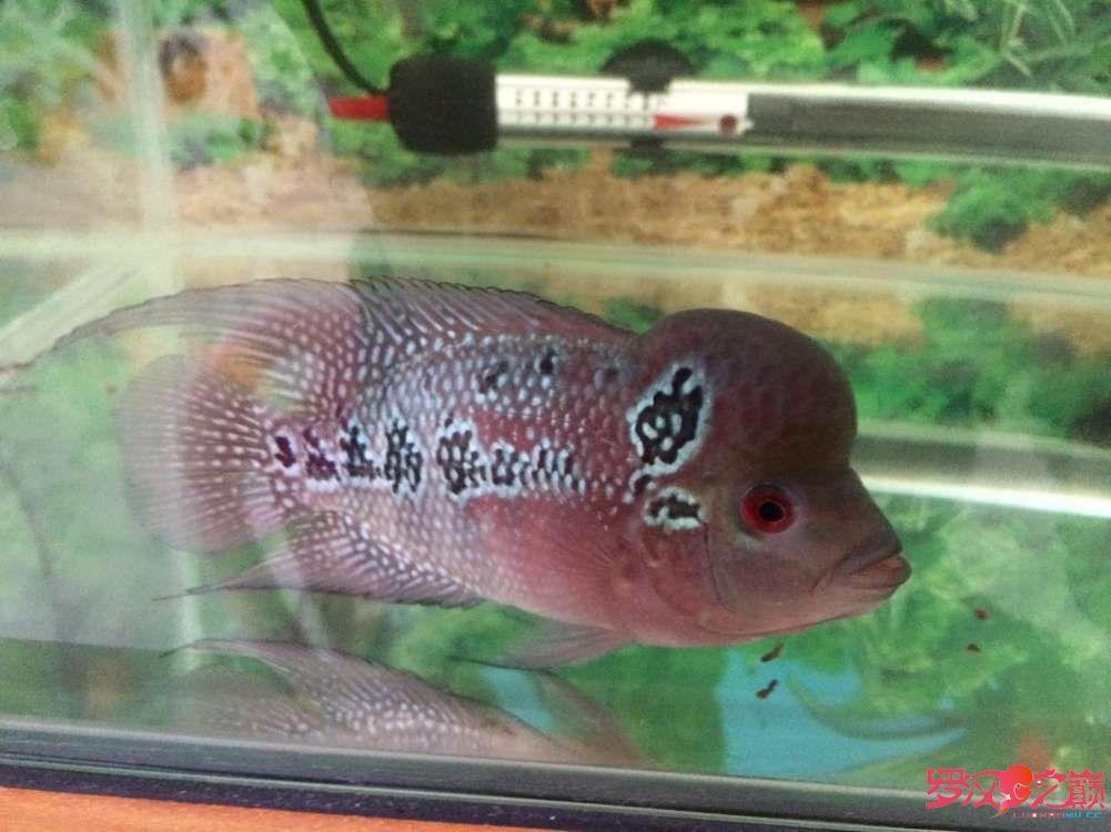 同学让我放生了大神们帮忙看看这鱼如何 北京龙鱼论坛 北京龙鱼第5张