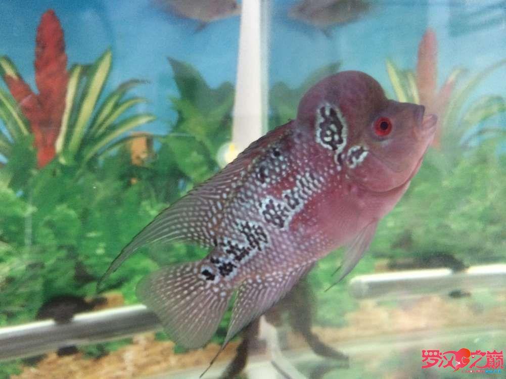 同学让我放生了大神们帮忙看看这鱼如何 北京龙鱼论坛 北京龙鱼第4张