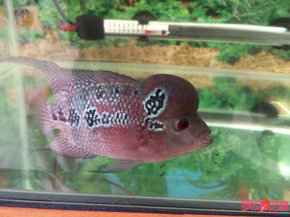 同学让我放生了大神们帮忙看看这鱼如何 北京龙鱼论坛 北京龙鱼第6张