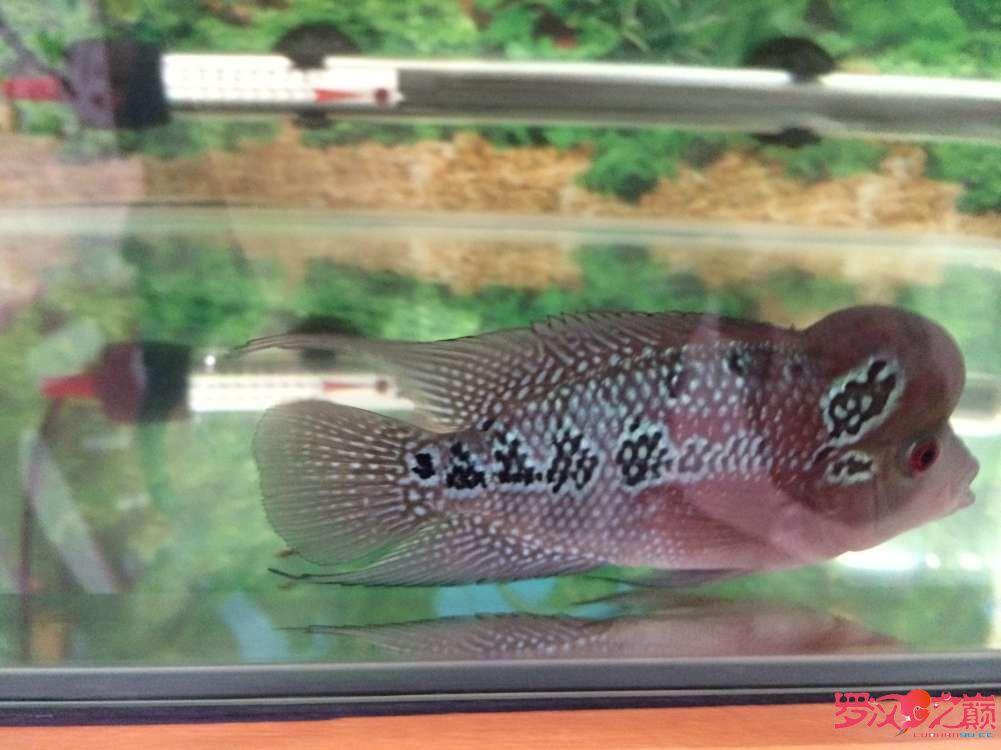 同学让我放生了大神们帮忙看看这鱼如何 北京龙鱼论坛 北京龙鱼第8张
