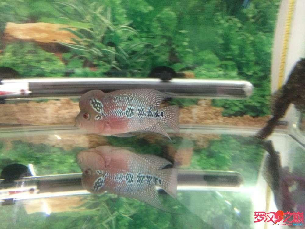 同学让我放生了大神们帮忙看看这鱼如何 北京龙鱼论坛 北京龙鱼第9张