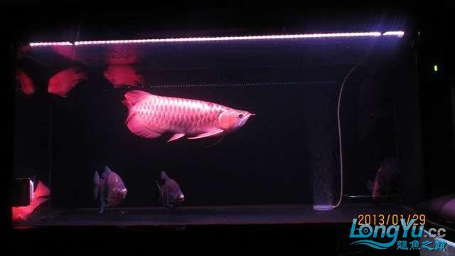 看看咱家的大战车 北京龙鱼论坛 北京龙鱼第6张