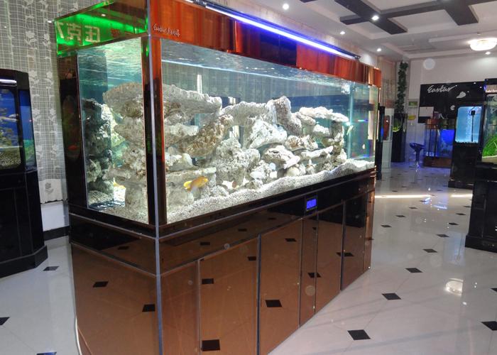 看看咱家的大战车 北京龙鱼论坛 北京龙鱼第11张