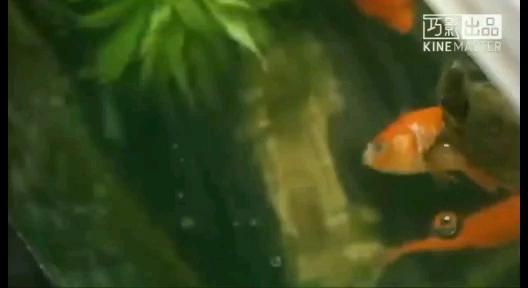 踩着别鱼的尸体往上爬 北京观赏鱼 北京龙鱼第1张