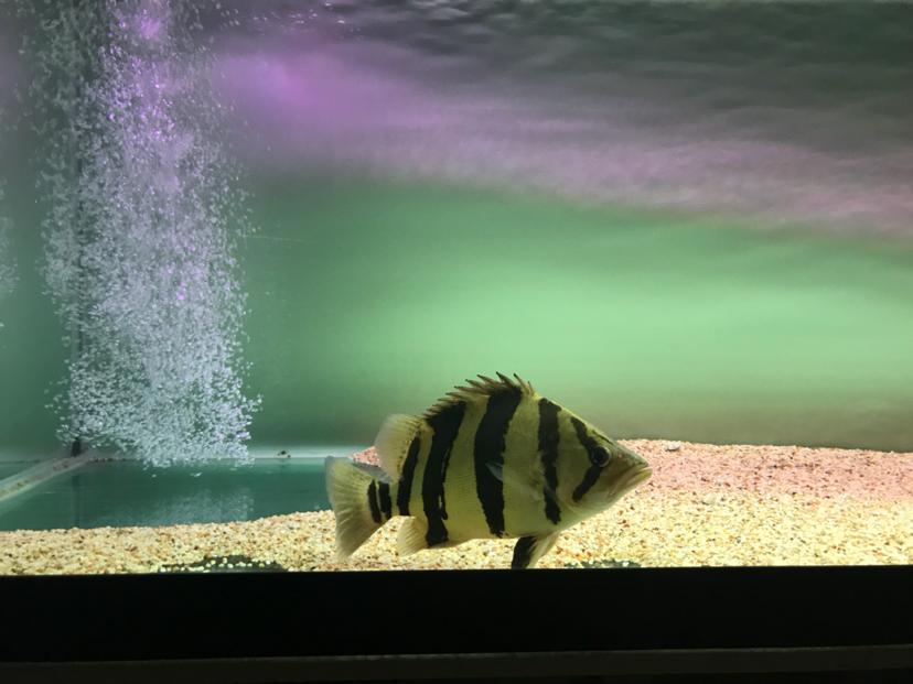 我只敢看你这一面 北京观赏鱼 北京龙鱼第1张