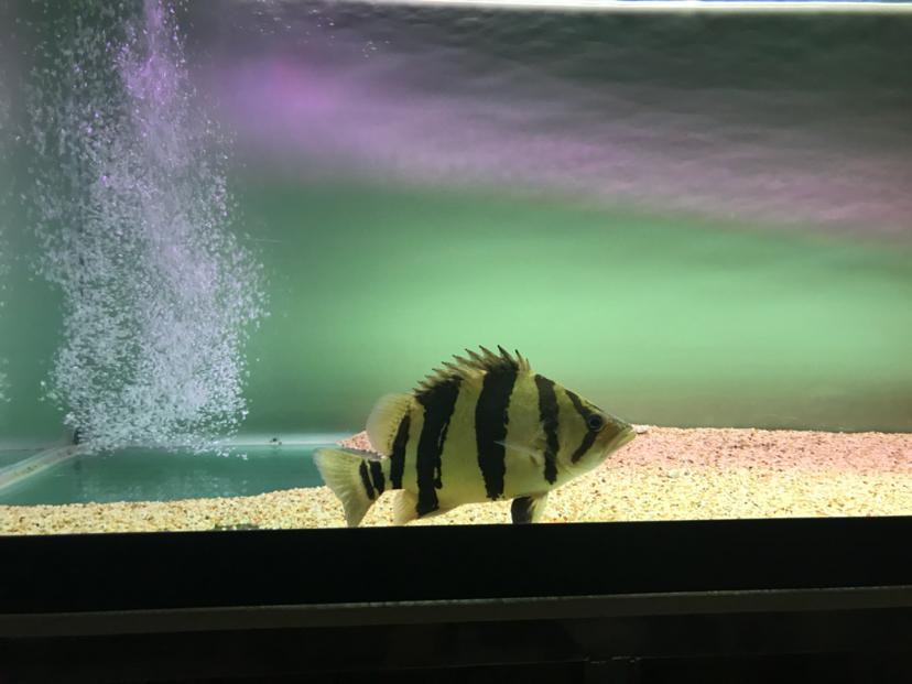 我只敢看你这一面 北京观赏鱼 北京龙鱼第2张