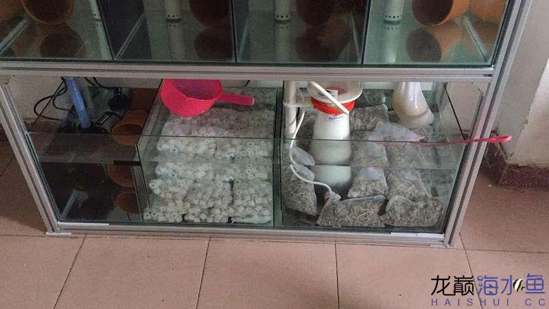 组缸海水鱼 北京龙鱼论坛 北京龙鱼第7张
