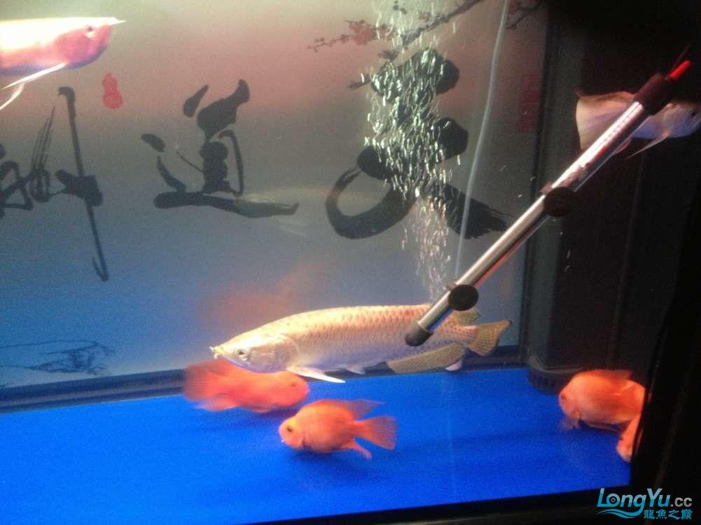 北京水族租赁鱼趣养水机养水说一说+换水方式 北京龙鱼论坛 北京龙鱼第3张