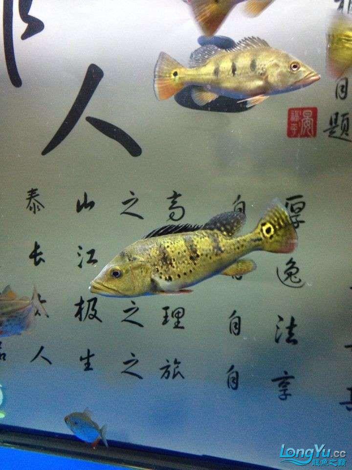 坐等求救 求救 巴西亚的问题 身上有白色的 北京龙鱼论坛 北京龙鱼第2张