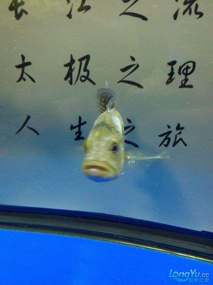 坐等求救 求救 巴西亚的问题 身上有白色的 北京龙鱼论坛 北京龙鱼第7张