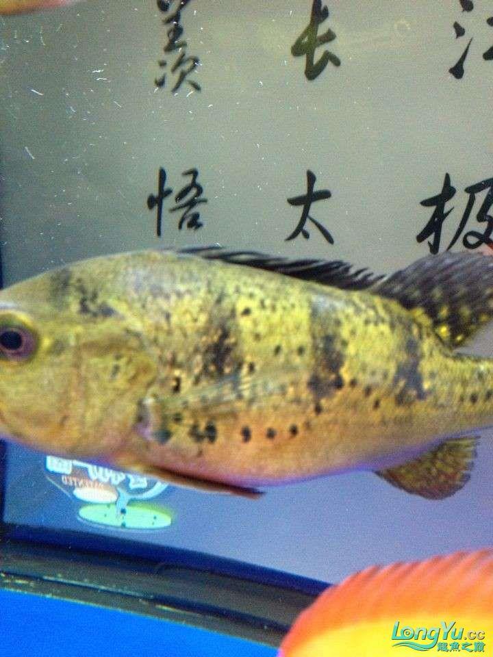 坐等求救 求救 巴西亚的问题 身上有白色的 北京龙鱼论坛 北京龙鱼第9张
