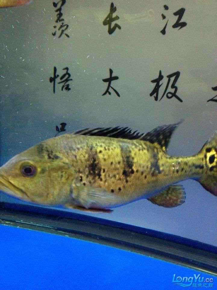 坐等求救 求救 巴西亚的问题 身上有白色的 北京龙鱼论坛 北京龙鱼第8张