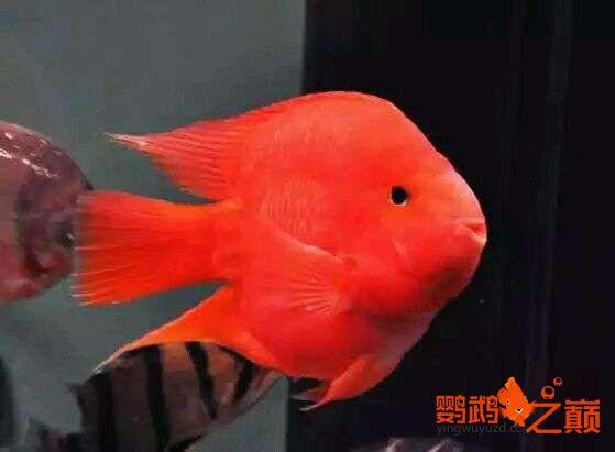 闲来发发我的小鹦鹉 北京观赏鱼 北京龙鱼第3张