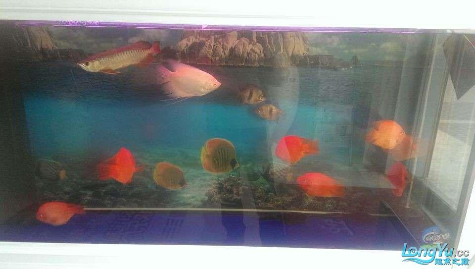 新买的龙鱼很是喜欢各位亲们帮忙鉴定下什么品种值多少钱 北京龙鱼论坛 北京龙鱼第8张