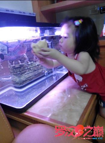 养鱼的女人不是传说 北京龙鱼论坛 北京龙鱼第3张