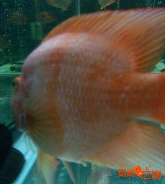 一缸鱼有红有白是为啥? 北京龙鱼论坛 北京龙鱼第4张