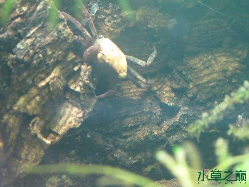 水陆缸虾蟹的天下 北京观赏鱼 北京龙鱼第17张