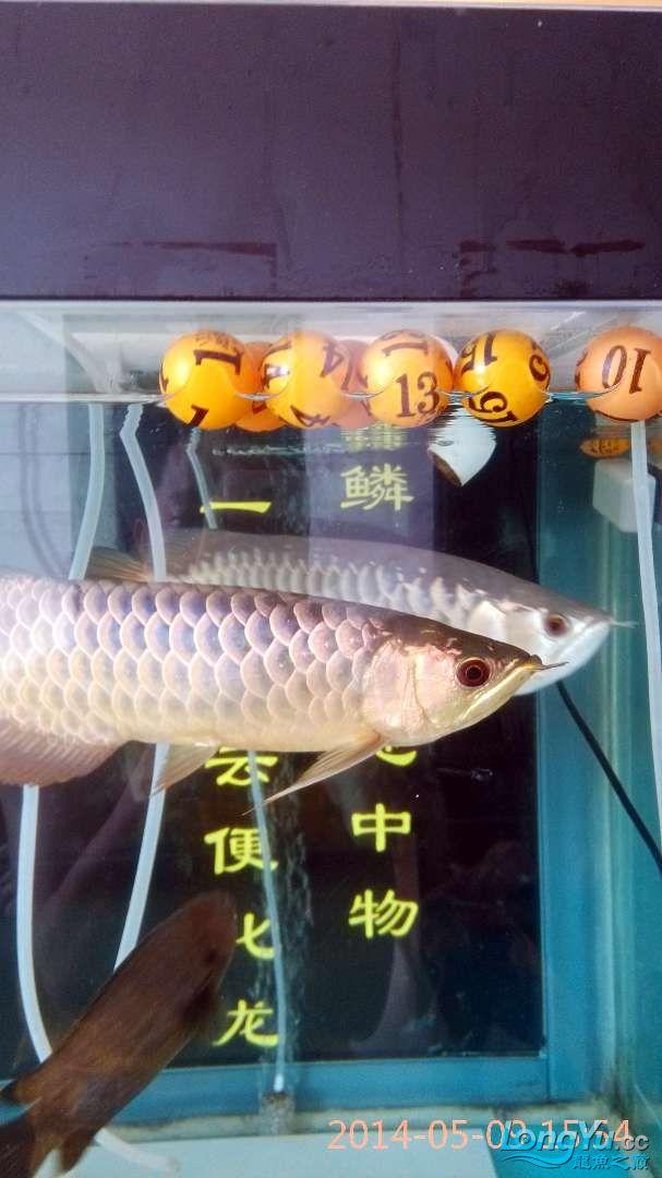 小过背给打了状态不行了 北京龙鱼论坛 北京龙鱼第1张