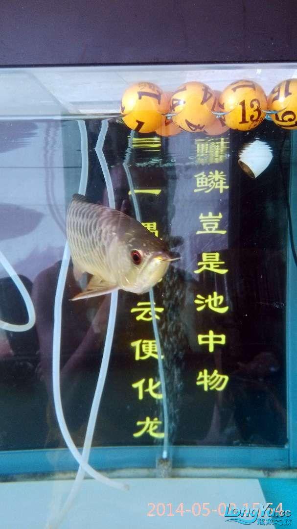小过背给打了状态不行了 北京龙鱼论坛 北京龙鱼第2张