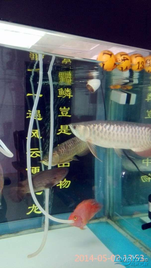 小过背给打了状态不行了 北京龙鱼论坛 北京龙鱼第8张