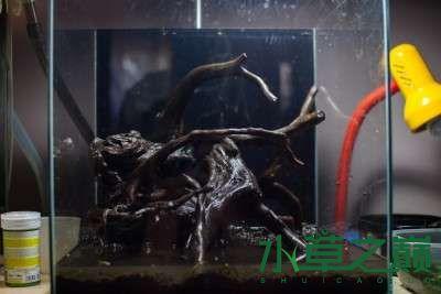 北京二手鱼缸水族箱35x35x35cm 小方缸前来献丑 北京观赏鱼 北京龙鱼第2张