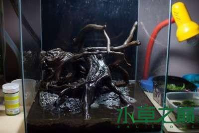 北京二手鱼缸水族箱35x35x35cm 小方缸前来献丑 北京观赏鱼 北京龙鱼第3张