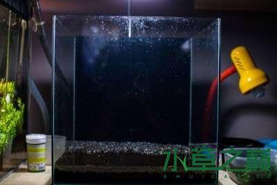 北京二手鱼缸水族箱35x35x35cm 小方缸前来献丑 北京观赏鱼 北京龙鱼第1张