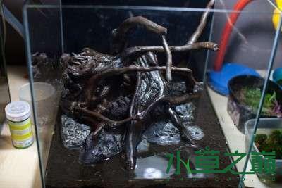 北京二手鱼缸水族箱35x35x35cm 小方缸前来献丑 北京观赏鱼 北京龙鱼第4张