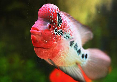 北京二手鱼缸水族箱35x35x35cm 小方缸前来献丑 北京观赏鱼 北京龙鱼第6张
