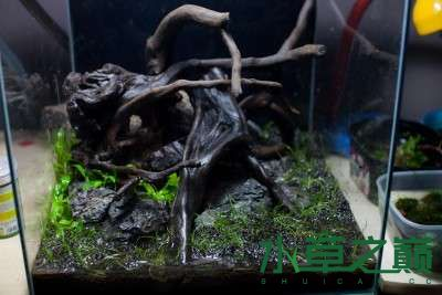 北京二手鱼缸水族箱35x35x35cm 小方缸前来献丑 北京观赏鱼 北京龙鱼第8张