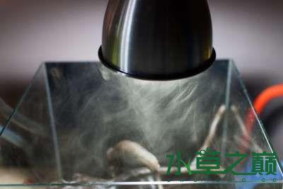 北京二手鱼缸水族箱35x35x35cm 小方缸前来献丑 北京观赏鱼 北京龙鱼第5张