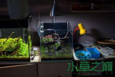 北京二手鱼缸水族箱35x35x35cm 小方缸前来献丑 北京观赏鱼 北京龙鱼第13张