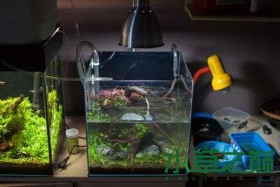 北京二手鱼缸水族箱35x35x35cm 小方缸前来献丑 北京观赏鱼 北京龙鱼第14张