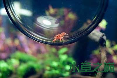 北京二手鱼缸水族箱35x35x35cm 小方缸前来献丑 北京观赏鱼 北京龙鱼第18张