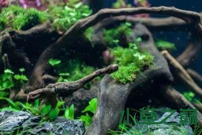 北京二手鱼缸水族箱35x35x35cm 小方缸前来献丑 北京观赏鱼 北京龙鱼第24张