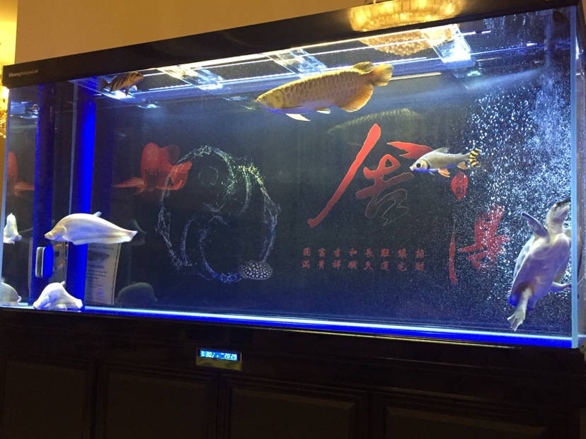 我想说:鱼和老婆都挺费钱 北京龙鱼论坛 北京龙鱼第3张