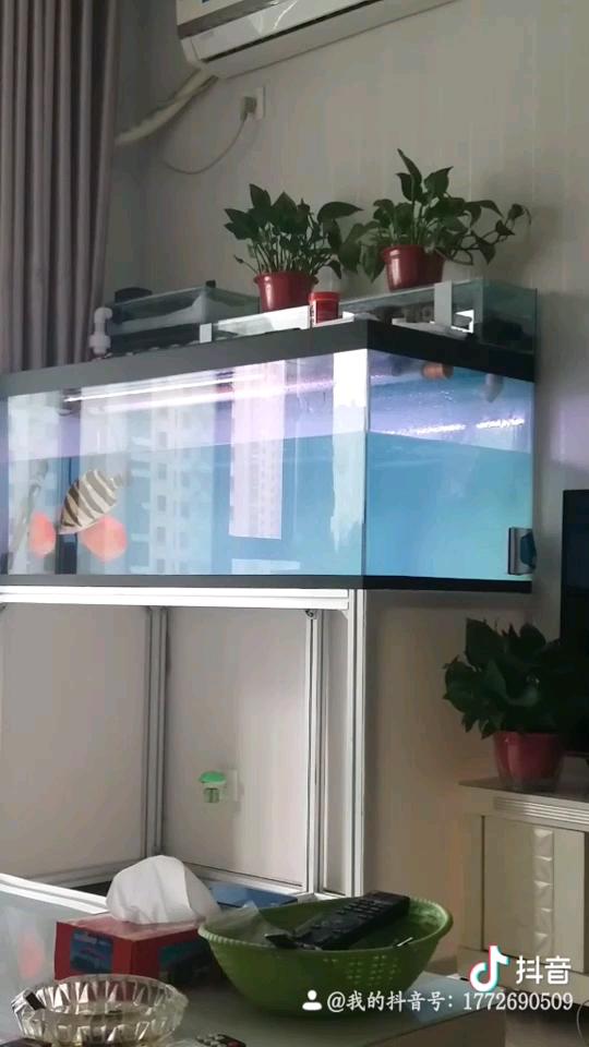 打卡 换水 作业 北京观赏鱼 北京龙鱼第1张