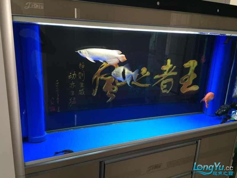 北京魟鱼价格北京龙鱼水质看看怎么样?没食欲。