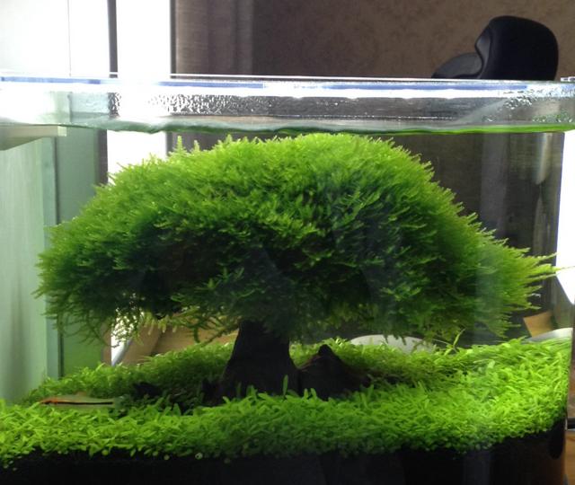 北京观赏鱼缸定做北京水族箱鱼缸官网随便玩的,大家随意看一下
