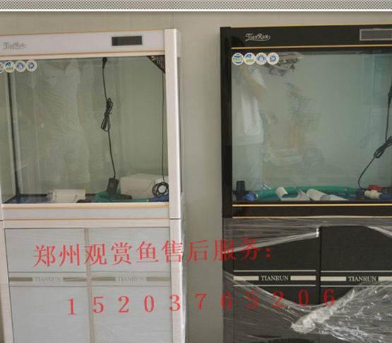 北京鱼缸订制泰国虎打卡虎鱼龙巅 北京龙鱼论坛