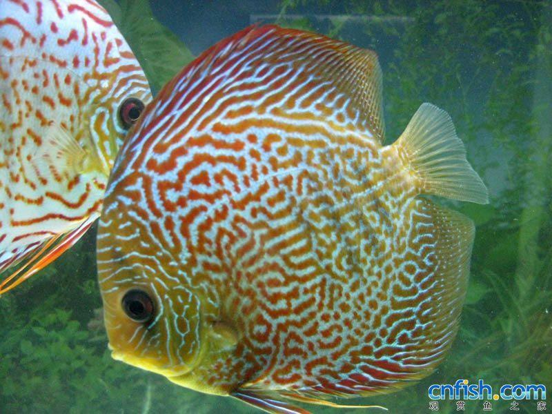 周六折腾周北京女王大帆日看鱼 北京观赏鱼
