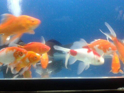 鱼池准备动工 北京龙鱼论坛