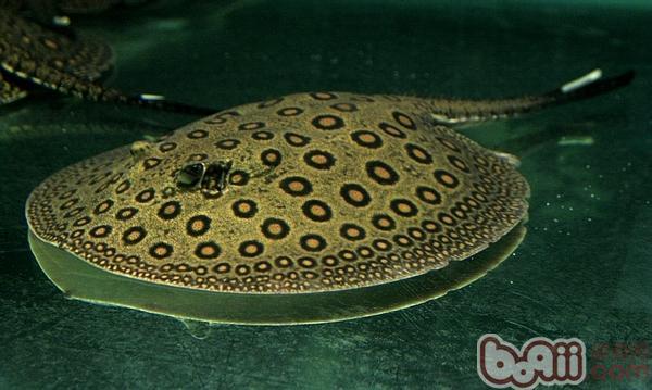 鱼缸缸擦问题龙鱼圈 北京观赏鱼