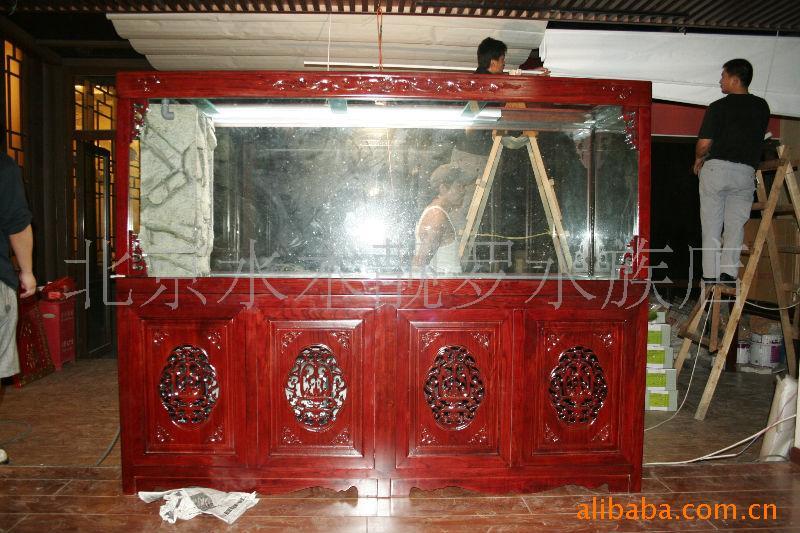 只要有就是过背——北京观赏鱼之家