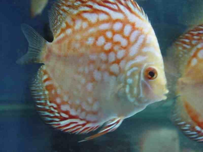 北京水族馆塌方北京薄荷糖定做星点龙鱼须子问题 北京观赏鱼