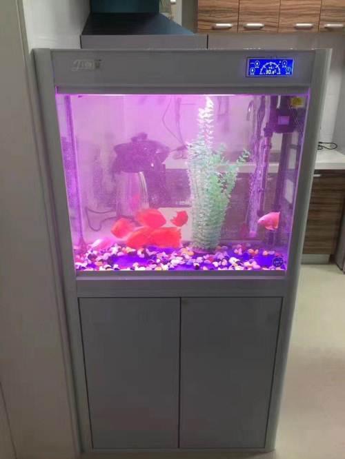 圆澳和黄头能配嘛北京观赏鱼缸定制? 北京龙鱼论坛