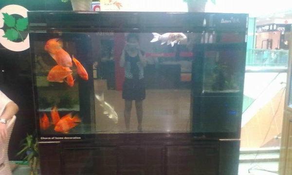 再转高清锦鲤鱼和鱼池 北京龙鱼论坛
